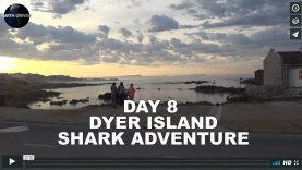 UNIVERSITY OF EARTH:  DAY 8 – GANSBAAI SHARK TRIP – OCEANS 1