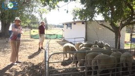 UNIVERSITY OF EARTH:  DAY 6 – ANIMAL FARMING 2