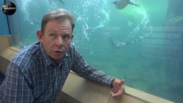 UNIVERSITY OF EARTH: DAY 20 - FISH 2 - NEIL DEACON